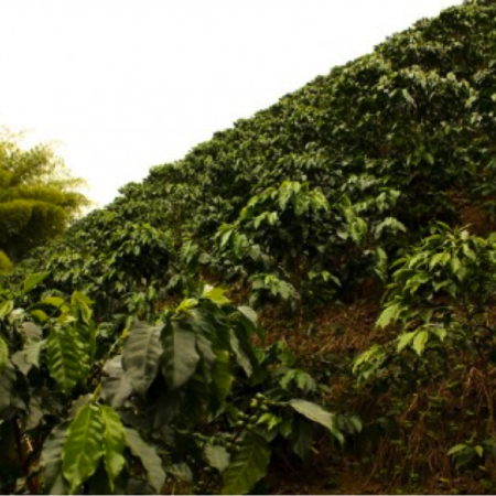 colombia-decaf